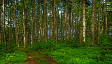 trees woods